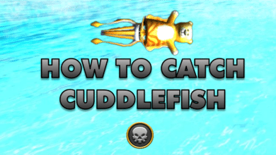 Photo of How to catch a Cuddlefish