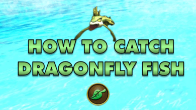 Photo of How to catch a Dragonfly Fish