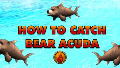 Photo of How to catch a Bear Acuda